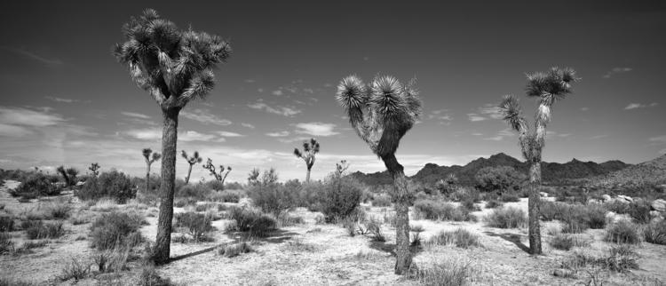 trio, Joshua Tree National Park - frankfosterphotography | ello