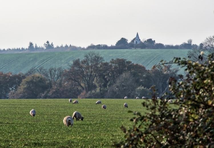 Sheep - grazing Farley Mount Mo - neilhoward | ello