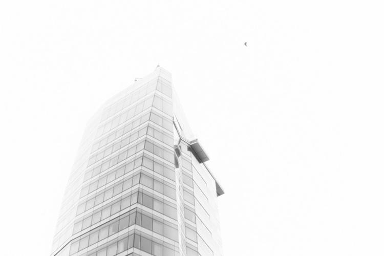 Condominium pigeon - photography - iangarrickmason | ello