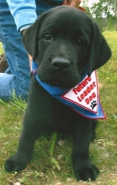 Chief Puppy continuation Glenwo - ccruzme | ello