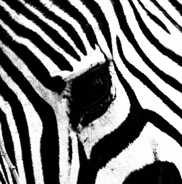 Eye zebra - notabene | ello