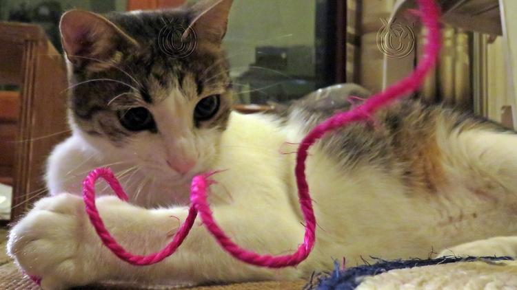 Spithas cat <3 spice life - Greece - paraxeno | ello
