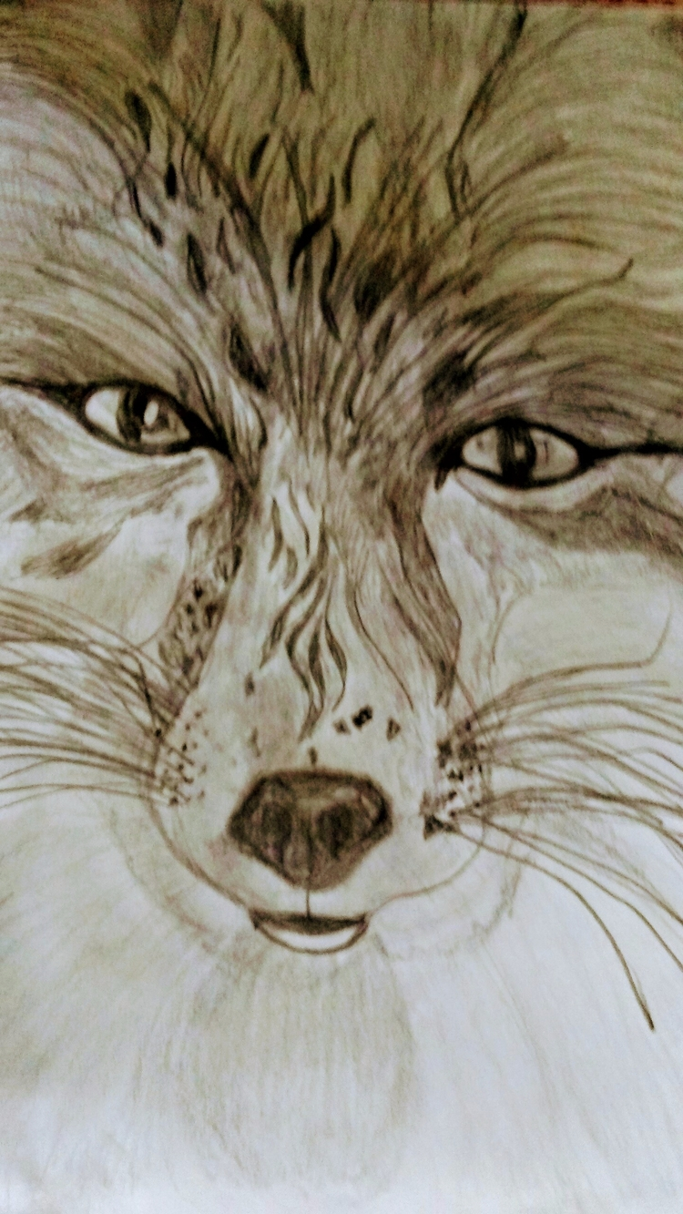 Wolf Pencil Drawing - kathryn_savino | ello