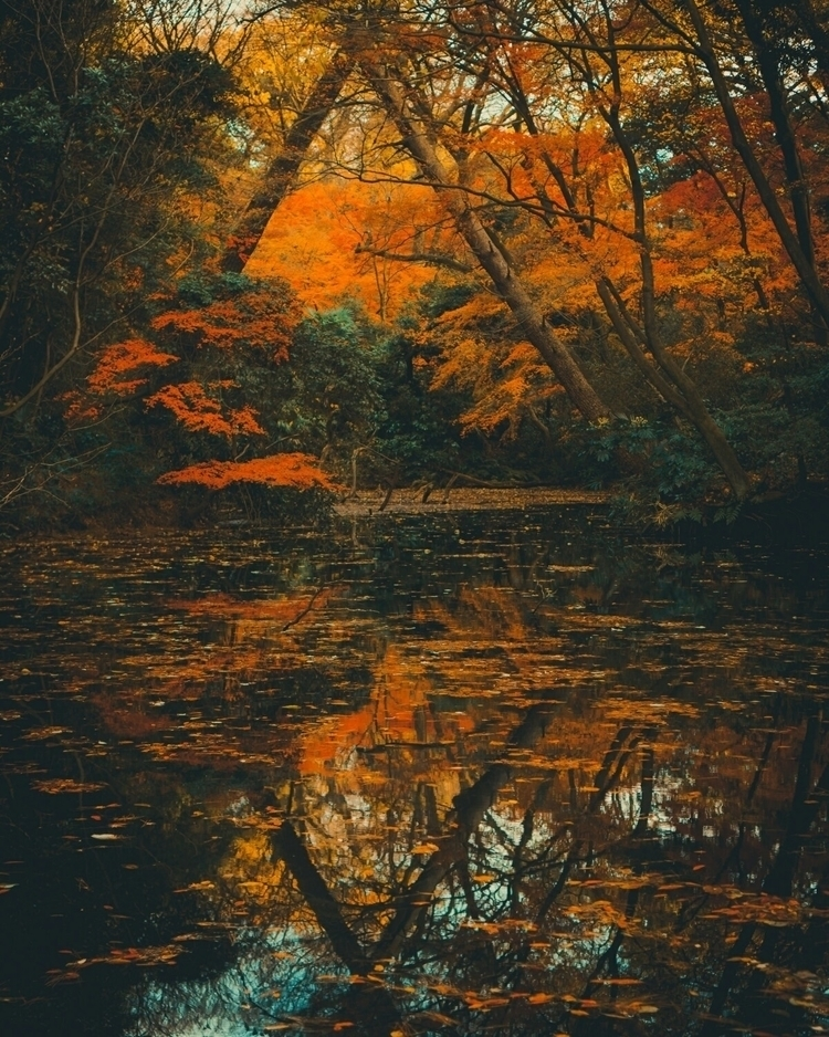 Nature, pond, leaves, colors, r - fokality   ello