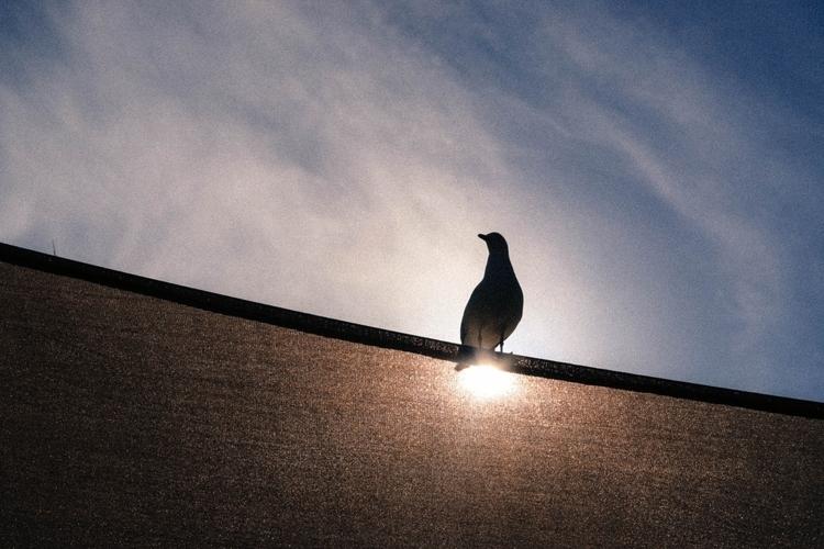 silhouettes Coromandel - seagull - leheaux   ello