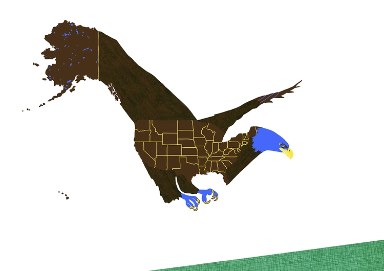 American Bald Eagle - illustration - ellis__d | ello
