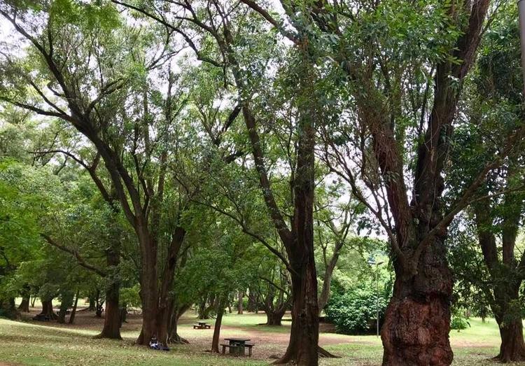 Área para piqueniques Parque Ib - antoniomg | ello