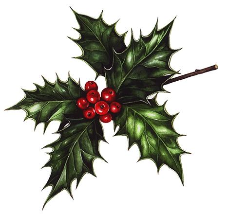 Latest blog leaf (nice festive - lizzieharperillustrator | ello