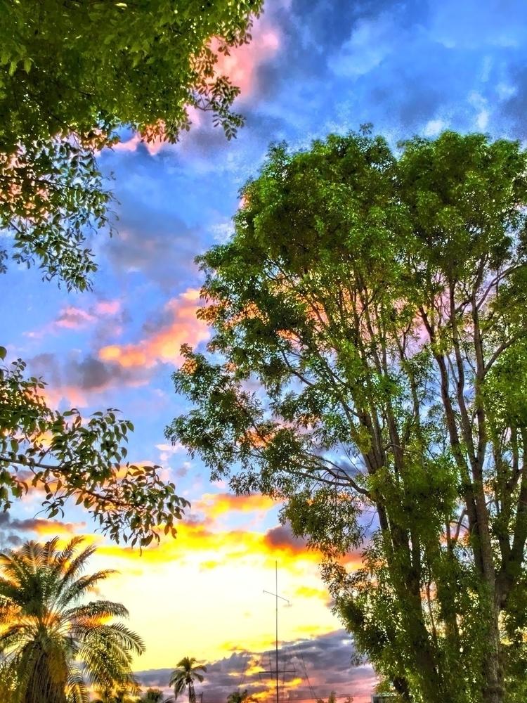 Evening Sunset Backyard Apps - mikefl99 - mikefl99 | ello