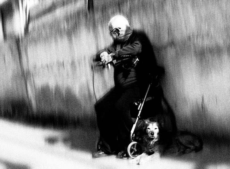 man dog - photography, bw, street - elhanans | ello