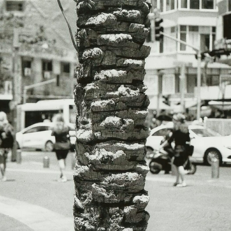 tree, argentique, nikormat, palmier - nate0097 | ello