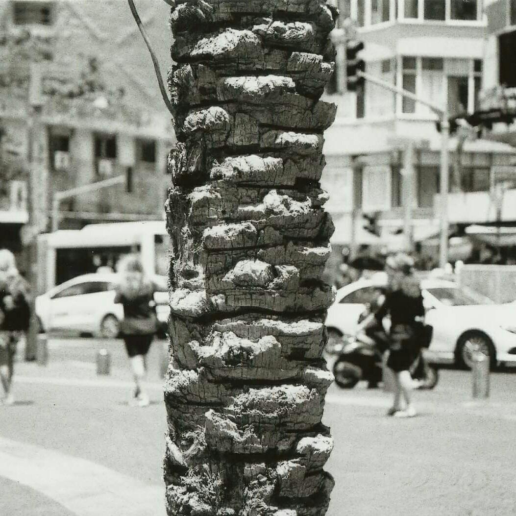 tree, argentique, nikormat, palmier - nate0097   ello
