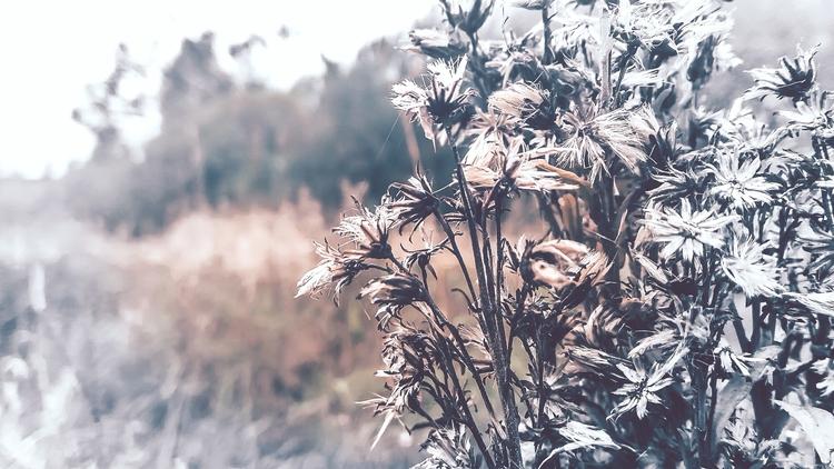 nature, lithuania, travel, природа - beheroght | ello