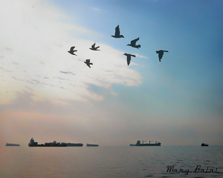 Shadows - photography, ships, birds - mairoularissa | ello