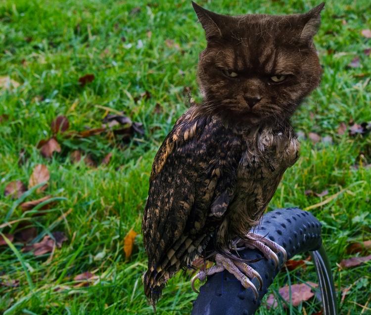 Catowl... magic catowl ... phot - neilhoward   ello