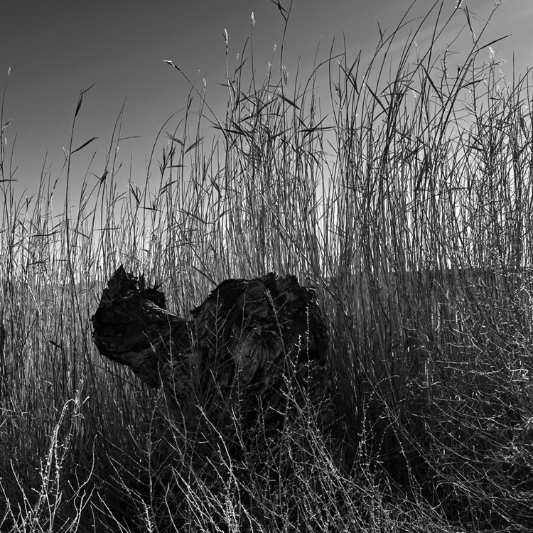 stump, north Bishop, California - frankfosterphotography   ello