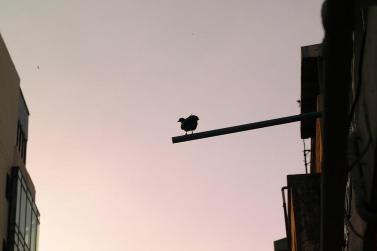 Bird - tanakornxl | ello
