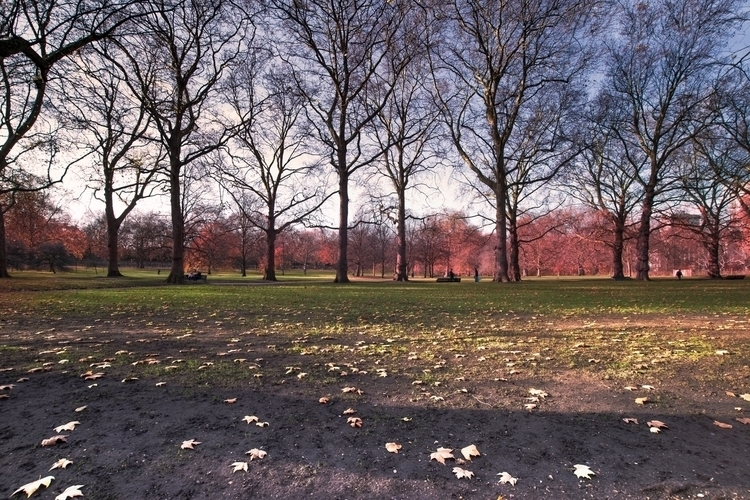 Green Park, cold November morni - simplycomplicatedphotography | ello