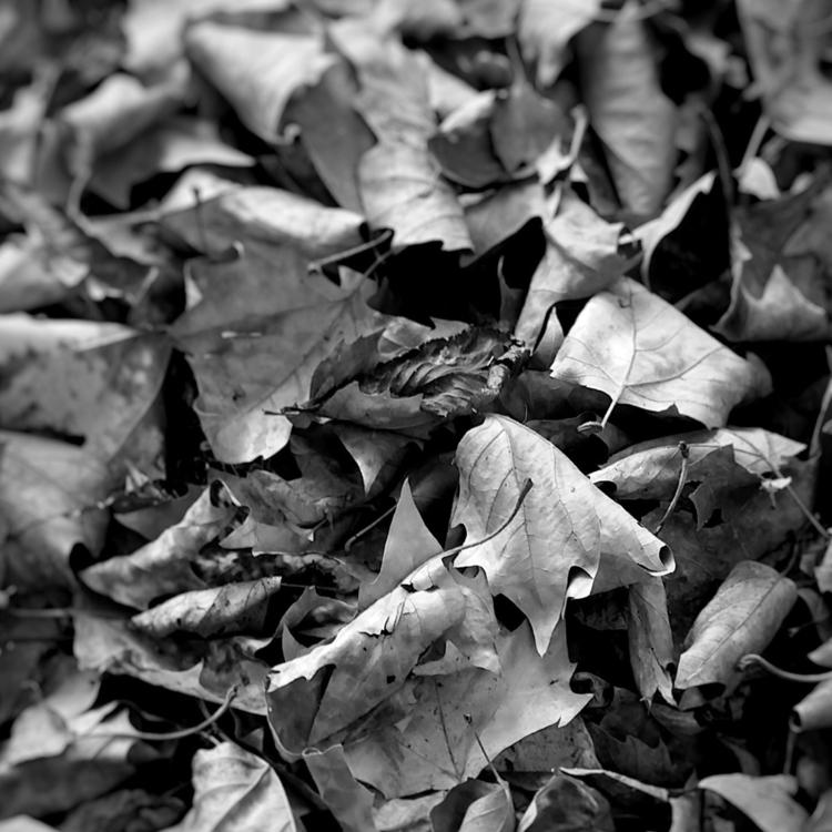 Autumn Black White - blackandwhite - aleksaleksa | ello