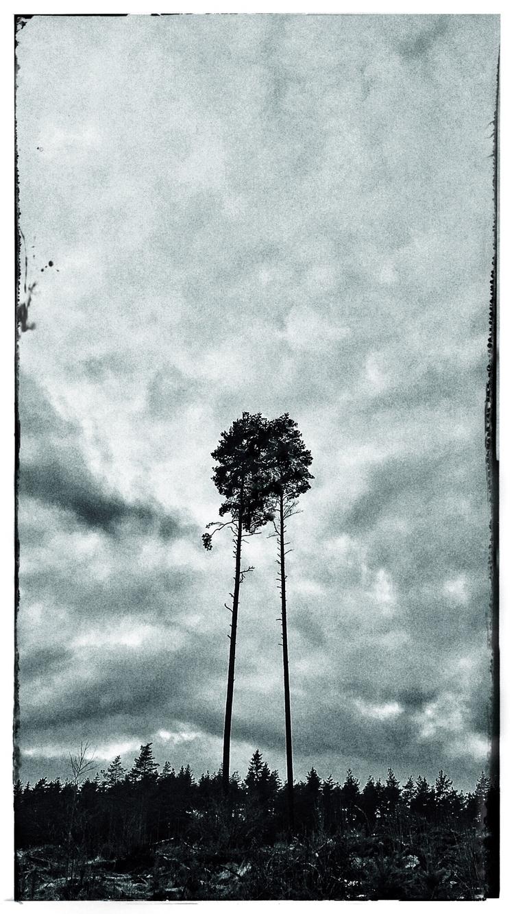 Walking dark forest. Meeting tr - ollipekka   ello