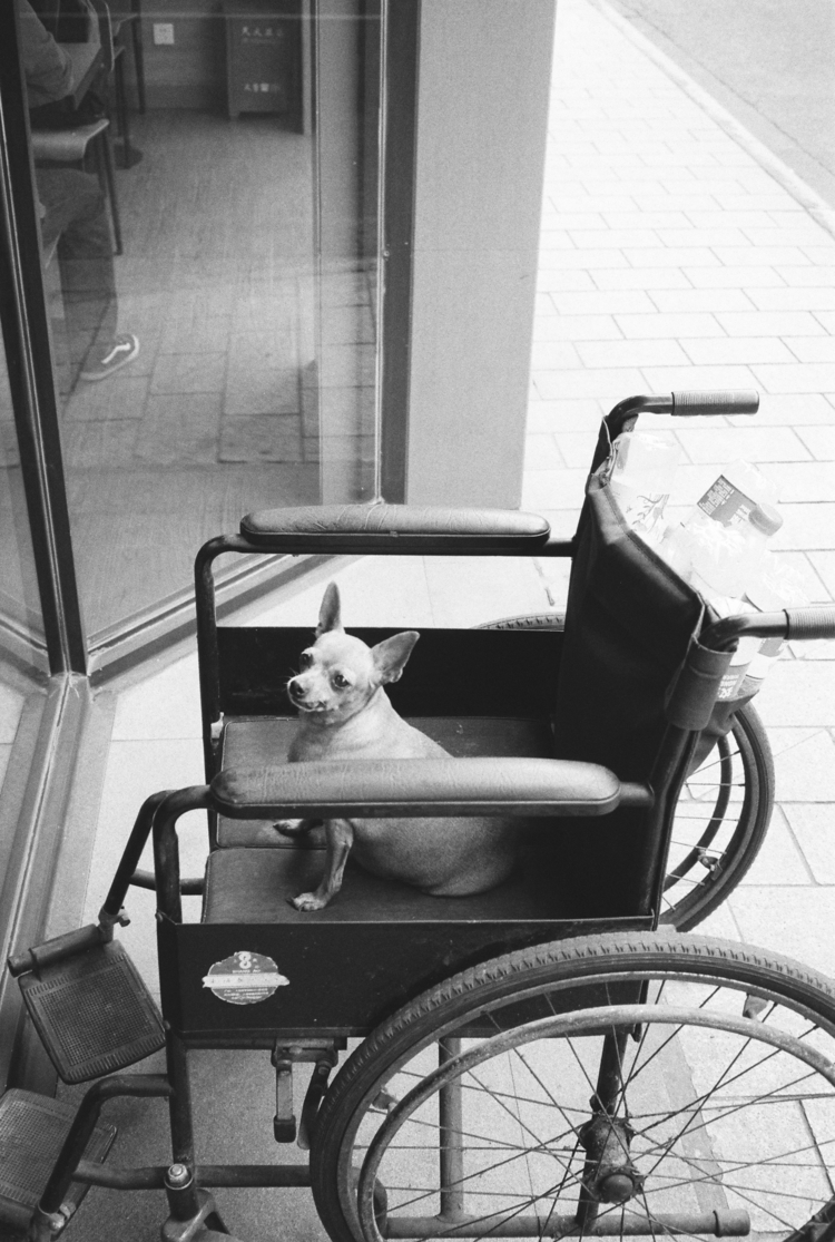 updog? - Shanghai | 9/2017 - 35mm - klei_ber | ello