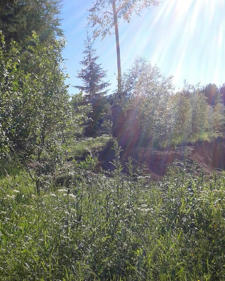 Även sandtaget grönskar på Lill - skogskyrkogardar   ello
