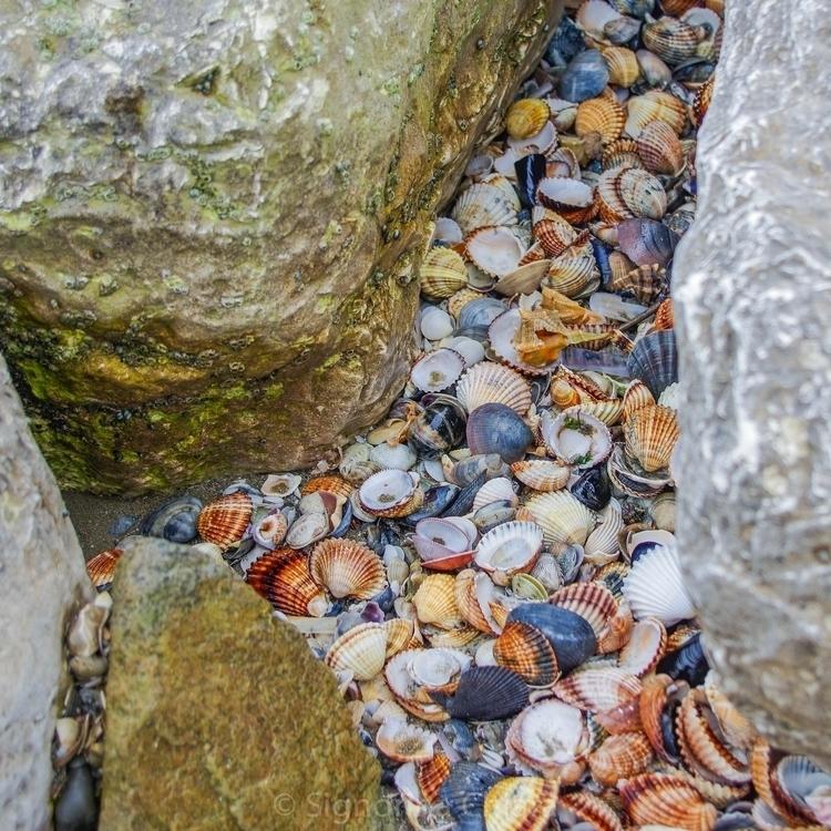 nature - shells, beach, rocks, coloures - chiaralucissimi | ello