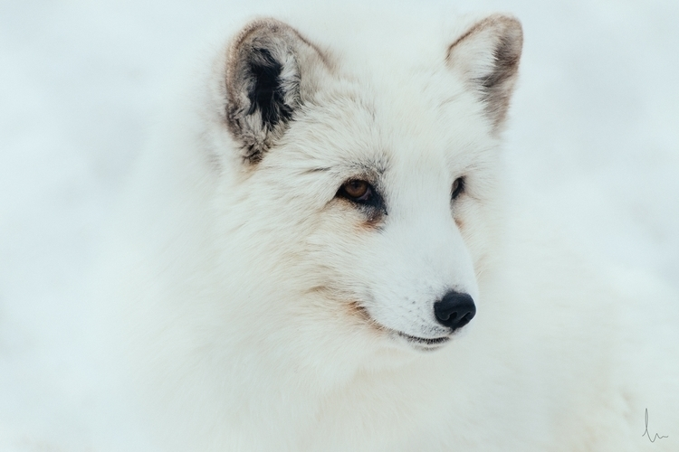 Arctic Fox fabulous winter coat - madebydusk | ello
