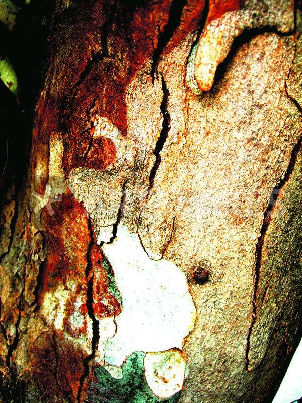 Efkaliptus [Hug - photography, ompisition - petro5va5iadi5 | ello