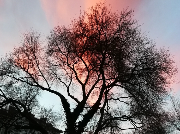 clementinelin Post 05 Jan 2018 01:55:53 UTC | ello