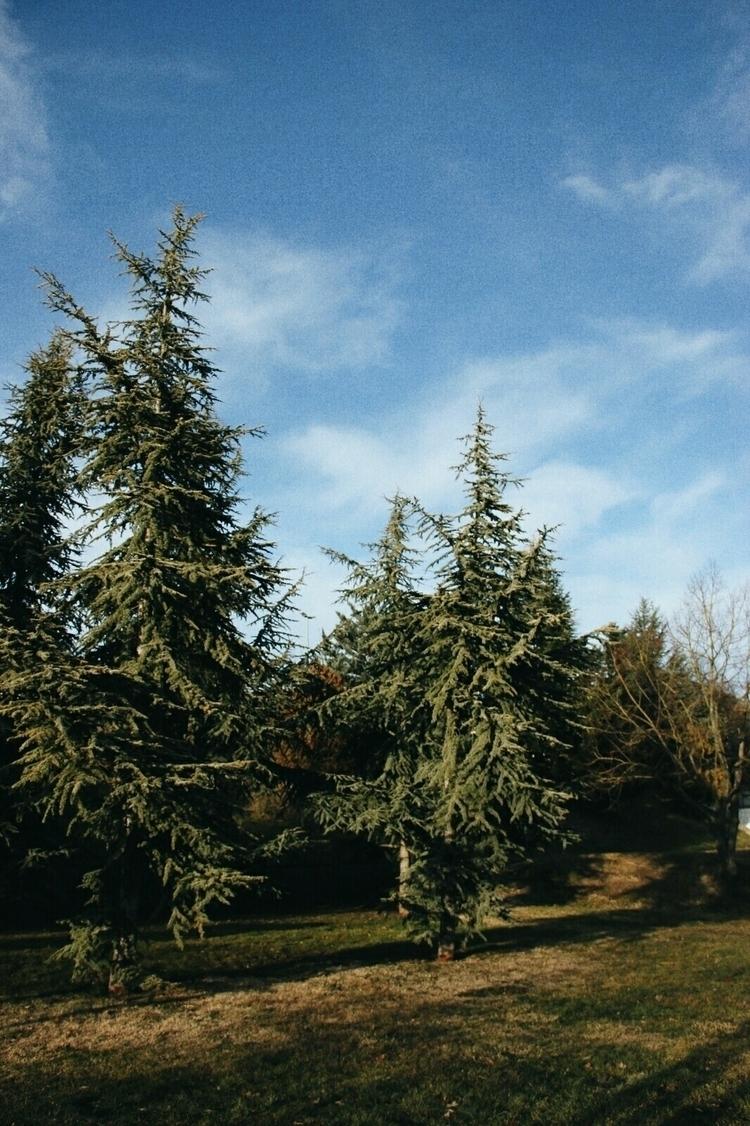 christmas trees - breadcrumbfountains   ello