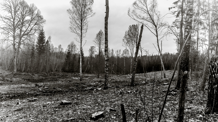 forest, trees, dark, darksoul - beheroght | ello