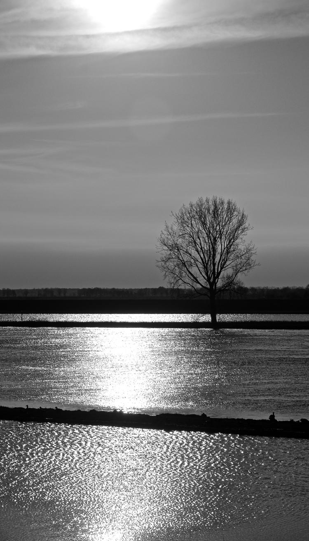 High water Maas - Balgoy 1 - faest0 | ello