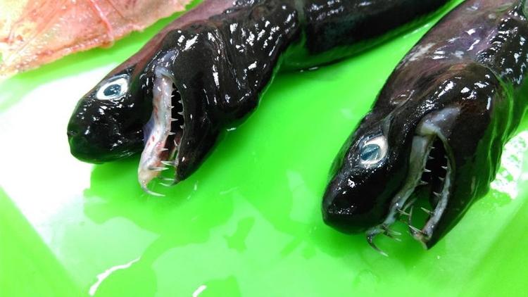 Extraños tiburones con mandíbul - codigooculto | ello