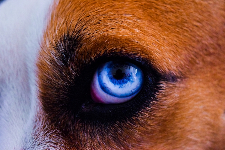 animals, photography, blueeyes - cainaguari | ello