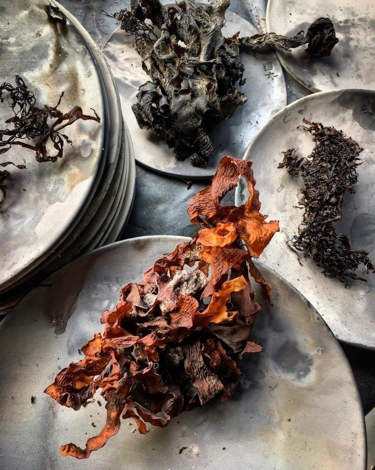 Seaweeds | Salty mark making ma - madeofaustralia | ello