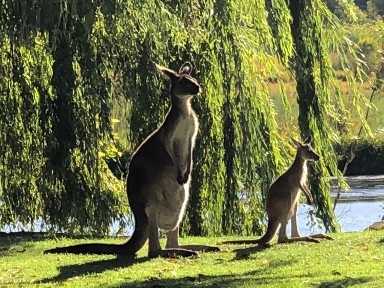 Westernaustralia, Yanchep - gerhardholzmann | ello