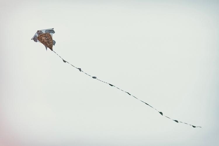 Brighton Kite Day 2017, Zealand - mikedowsett   ello