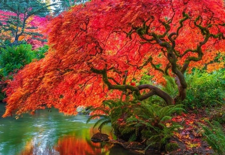 Tucked Kubota Japanese Garden,  - jasonmatias | ello