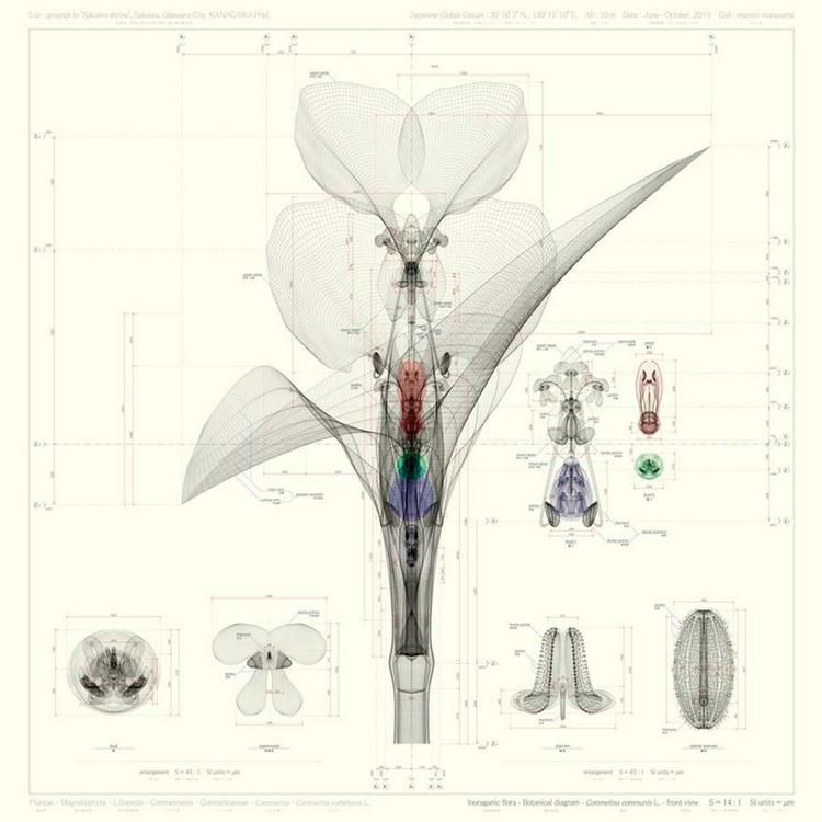 Macoto Murayama | Inorganic Flo - ronbeckdesigns | ello