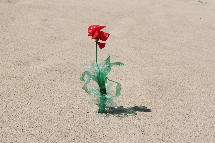 Flowers growing plastic bottles - rosamontesa | ello