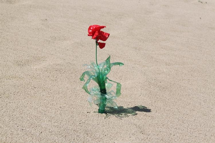 Flowers growing plastic bottles - rosamontesa | ello