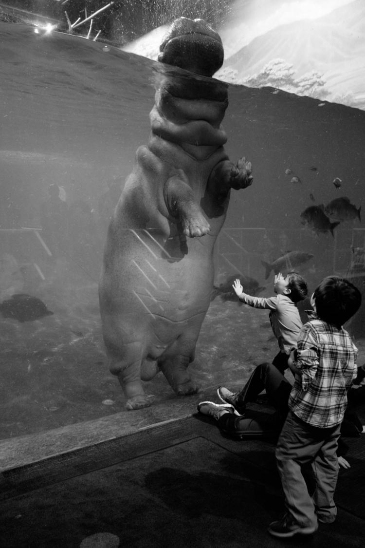 High rise - fujifilm, fujifeed, aquarium - ekoshyk | ello