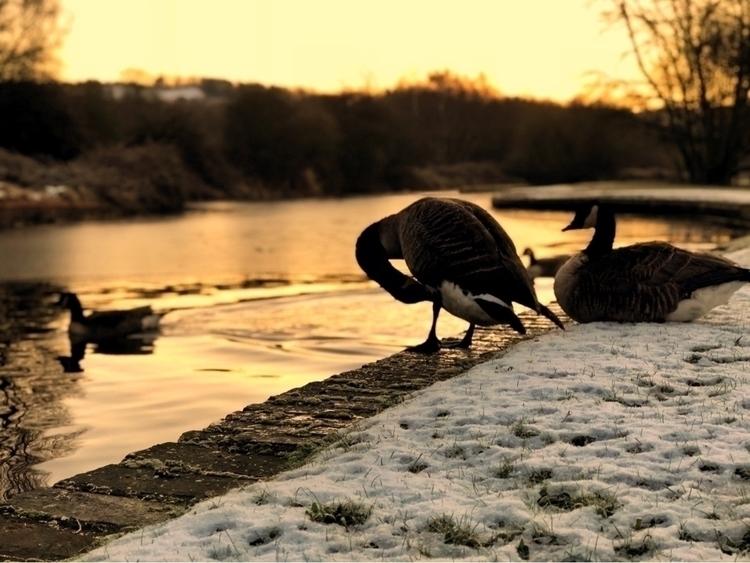 Wild Geese - Iphone, iphoneography - thatrichardjohnson | ello