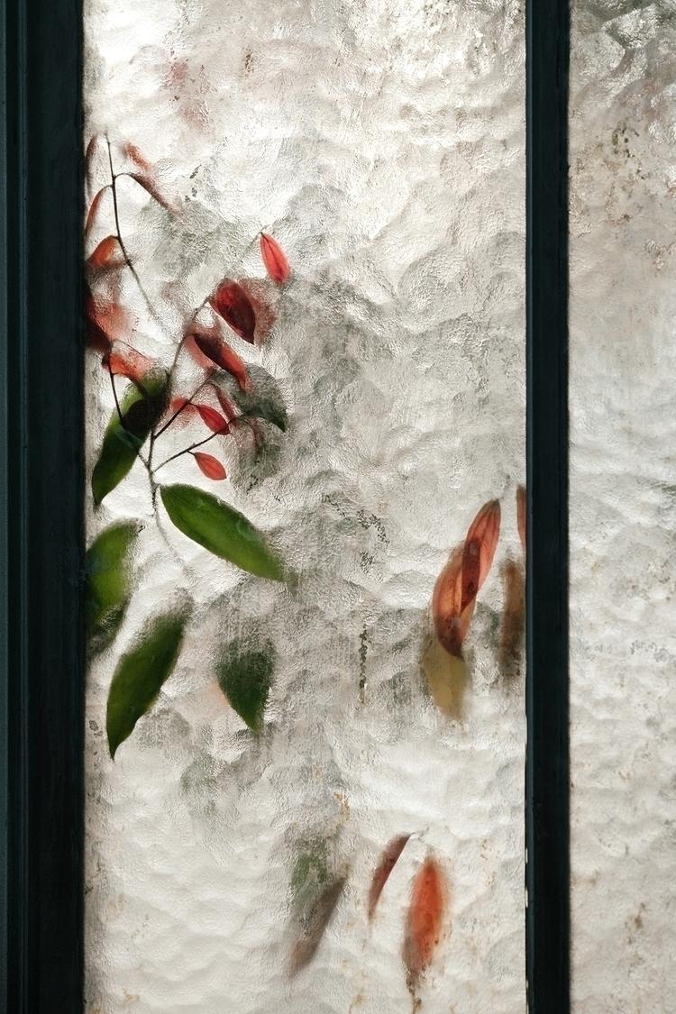 Lauraceae cinnamomum. 100 image - samuelzeller | ello