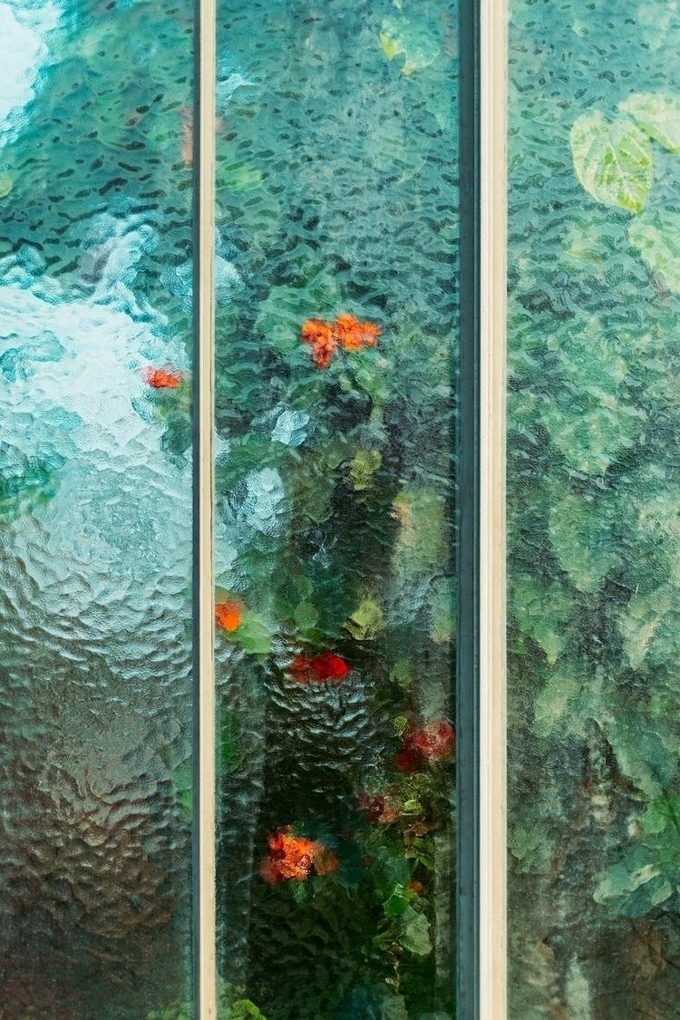 Araceae, Clerodendrum splendens - samuelzeller | ello