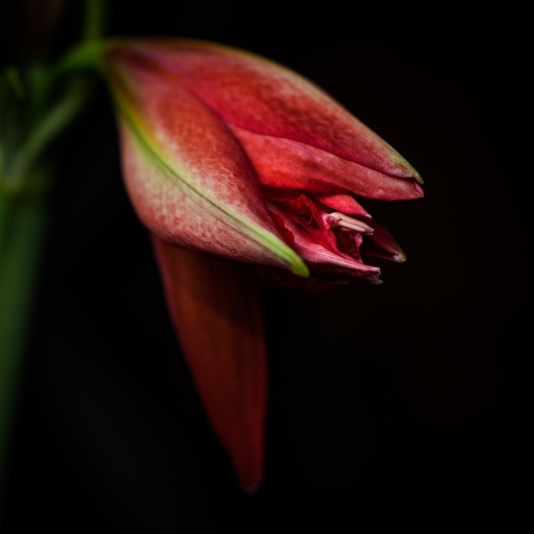 Botanical study - botanical, macro - peter_skoglund | ello