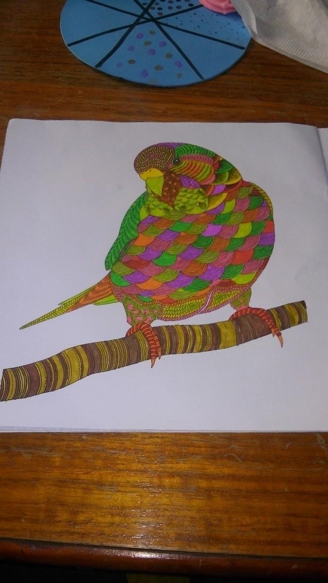 parrot - noracamila | ello