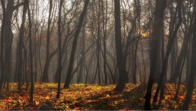 Morning Mist - nature, landscape - hipgnosisart | ello