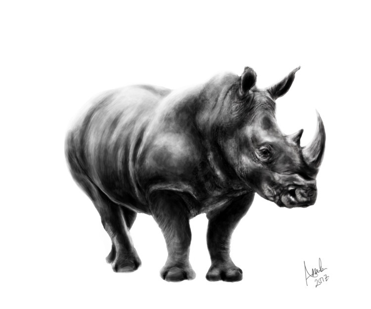 Rhino, Digital drawing - amandakanervoart | ello